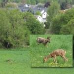"""""""Wildwechsel in der Grünwies"""" - Uli Bareth"""